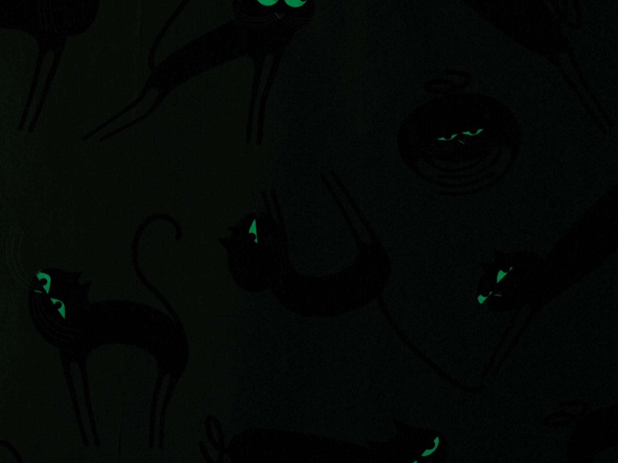 Lés de papier peint Cats phosphorescent, les yeux brillent la nuit et moustaches illuminent votre salon, design IchetKar